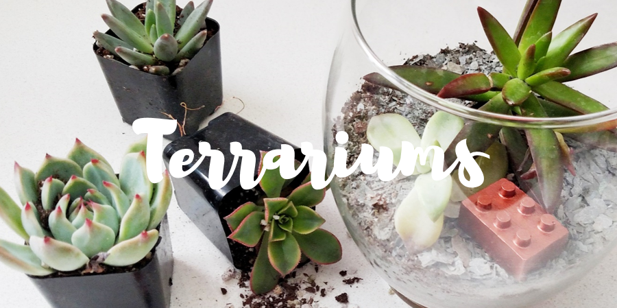 Terrarium Workshops